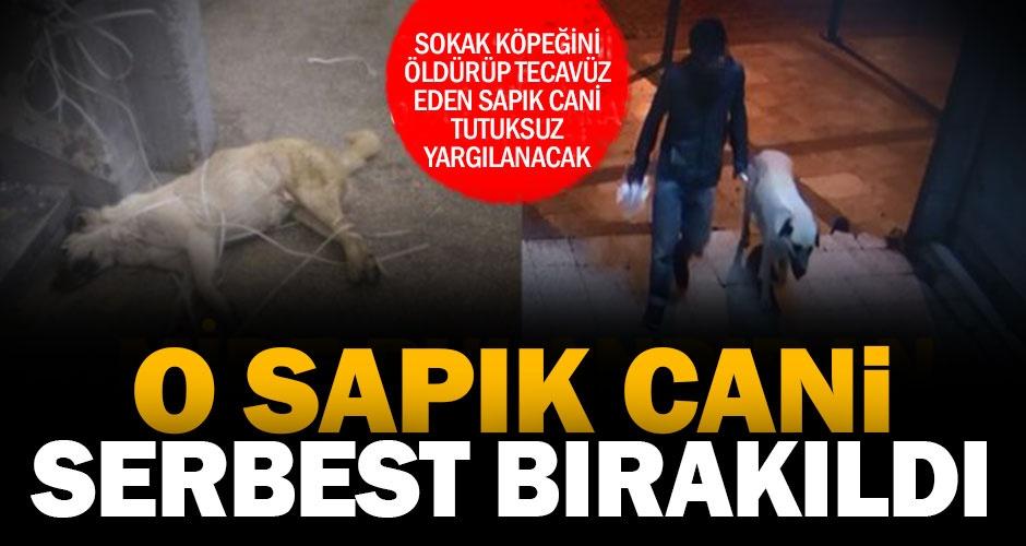 Sokak köpeğini öldürüp tecavüz eden cani serbest bırakıldı