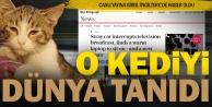 Dünyaca ünlü sokak kedimiz: Hüsnü