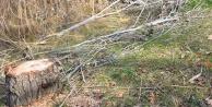 Üzerine ağaç devrilen çiftçi kurtulamadı