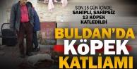 Buldan'da 13 köpek zehirlenerek öldürüldü