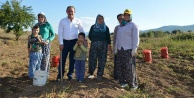 Tarımsal kredi borçları yapılandırılıyor