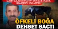 Saraköy'de boğa dehşeti