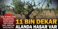 Çal ve Bekillide 11 bin dekar ve binlerce çiftçi zararda