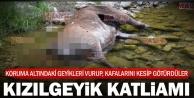Çivril'de geyikleri katlettiler, kafalarını kestiler