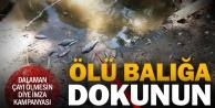 Dalaman Çayı ölüyor, bölge halkı imza kampanyasıyla kurtarmaya çalışıyor