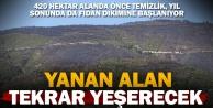 Sarayköy'de yanan alana yıl sonunda fidan dikilecek