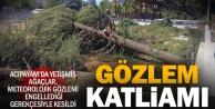 Meteoroloji istasyonundaki ağaçlar kesildi