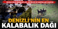 Akdağ'daki yaban hayvanı sayımı tamamlandı