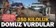 Çivrilli avcılar 250 kiloluk yaban domuzu vurdu