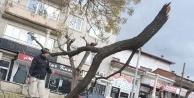 Buldan'da şiddetli rüzgar zarar verdi