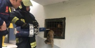 İtfaiye demir parmaklıklara sıkışan kediyi kurtardı