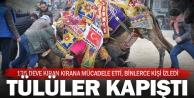 Binlerce kişi 34. Geleneksel Sarayköy Deve Güreşleri Festivali'nde buluştu