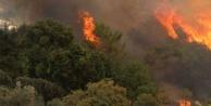 Çameli'de orman yangını