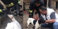 Bacağına zincirli kanca dolanan köpeği, itfaiye kurtardı