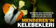 Menderesin birbirinden güzel kelebekleri