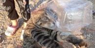Başı poşete sıkışan kediyi vatandaşlar kurtardı