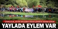 Çevreciler Zeytin Yaylasına tekrar dikkat çekti