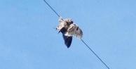 Yüksek gerilim hattına takılan baykuş kurtarıldı