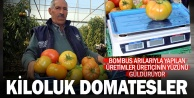 Bombus arısıyla ürettiği domateslerin her biri 1 kilo