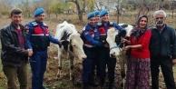 Çalınan inekleri jandarma buldu