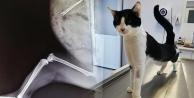Kedinin midesinden tel toka çıktı