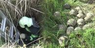 Kuyuya atıldığı sanılan 17 kaplumbağayı itfaiye kurtardı