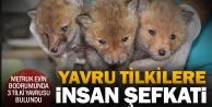 Bitkin bulunan 3 yavru tilki korumaya alındı