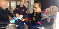 Çatıda sıkışan yaralı baykuşu itfaiye kurtardı