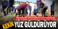 Türkiyenin kekik ihtiyacının yüzde 80ini karşılayan Denizlide hasat başladı