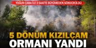 Kale'de orman yangını