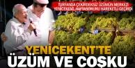 Yenicekent'te üzüm festivali coşkulu geçti