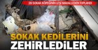 Çal'da 28 sokak kedisi zehirlendi