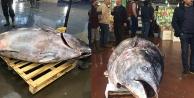 Denizli#039;de 450 kilogramlık orkinos ilgi odağı oldu