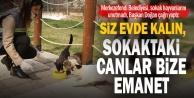 Merkezefendi Belediyesi'nden sokak hayvanları için beslenme odakları