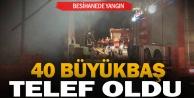 Denizli#039;de besihanede çıkan yangında 40 büyükbaş telef oldu