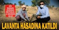 DTO Başkanı Erdoğan lavanta hasadına katıldı