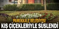 Pamukkale Belediyesi ilçeyi kış çiçekleriyle süslüyor