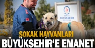 Sokak hayvanları Büyükşehir#039;e emanet
