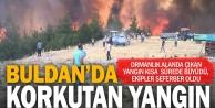 Türlübey'de orman yangını