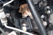 Otomobil motoruna sıkışan kediyi tamirci kurtardı