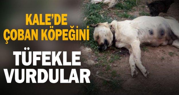 Denizli'de çoban köpeğinin tüfekle telef edilmesiyle ilgili soruşturma başlatıldı
