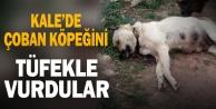 Denizli#039;de çoban köpeğinin tüfekle telef edilmesiyle ilgili soruşturma başlatıldı
